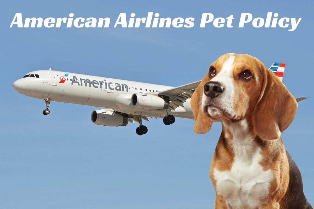 Us Service Animals Can You Bring Your Pets Aboard