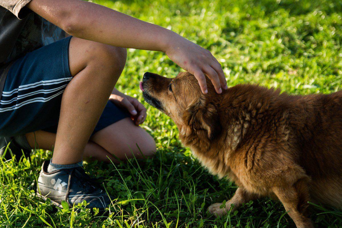 service dog trainer