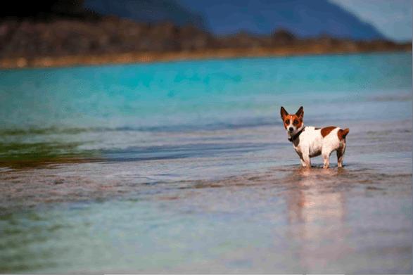 Service Dog Laws in Hawaii
