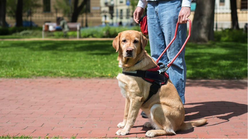 Service Dog Laws In Virginia
