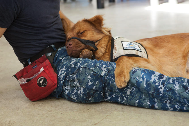 Service Dog for Panic Attacks