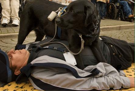 Service Dog for Seizures