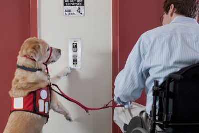 Service Dog For Mobility