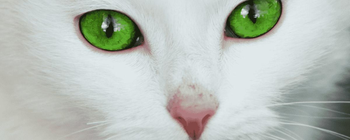 Service Cat