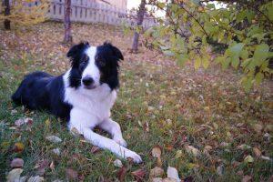 Dog for Epileptics
