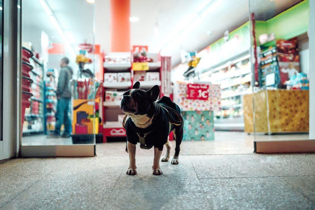 Pet-Friendly Stores