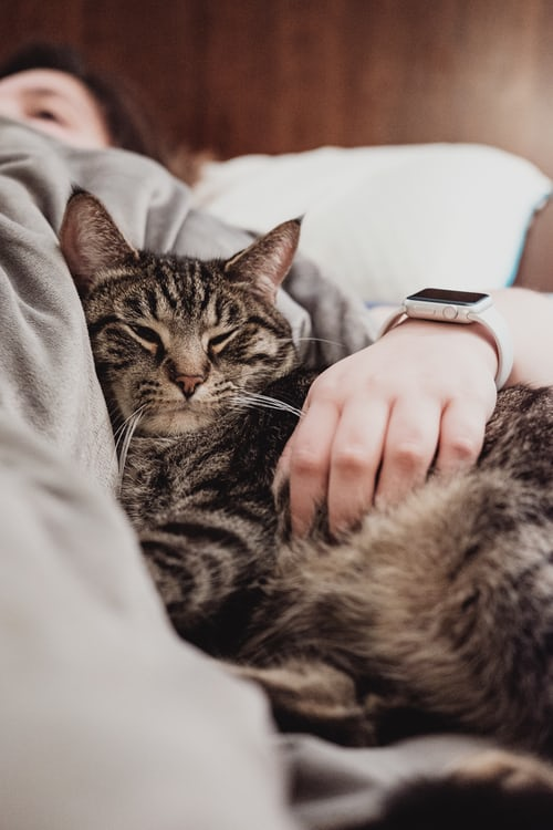 Do I Need an Emotional Support Cat Vest? Learn the Benefits Here