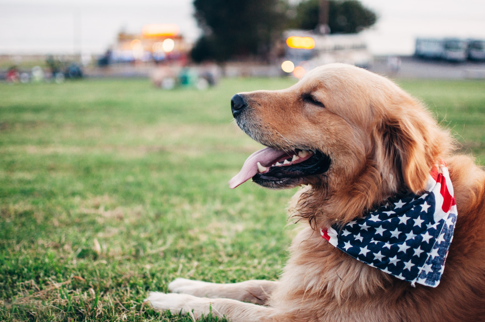 Service Dog Trainers: Nationwide