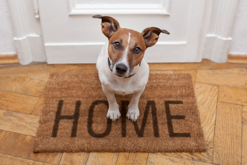 Dog Into Your Home