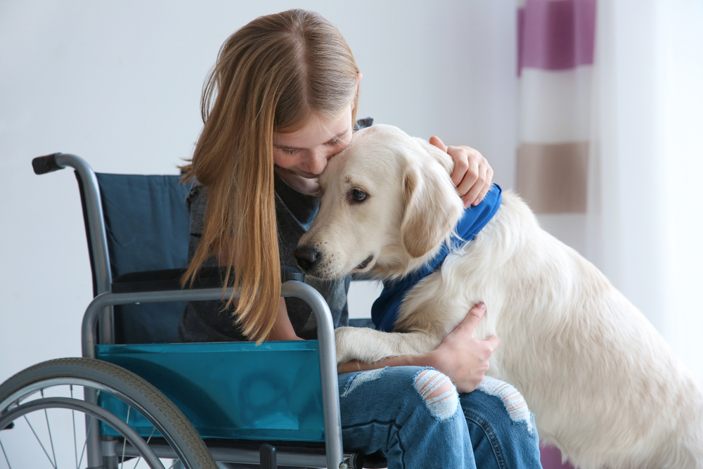 service dog with person in wheelchair