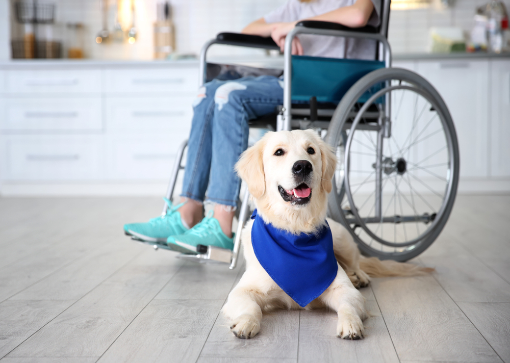 service dog by girl in wheel chair