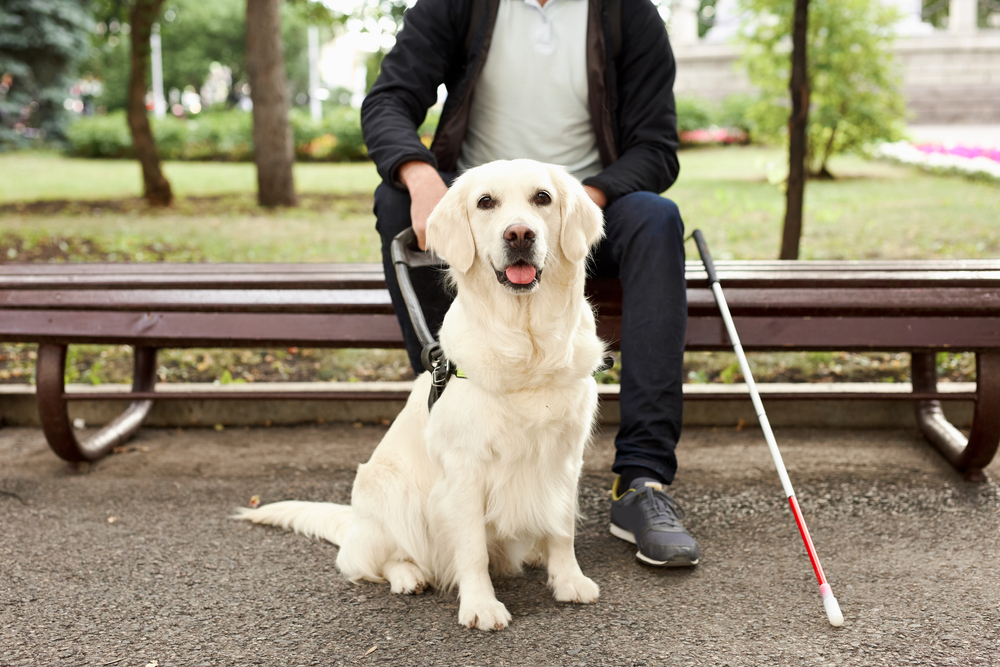 blind man with service dog