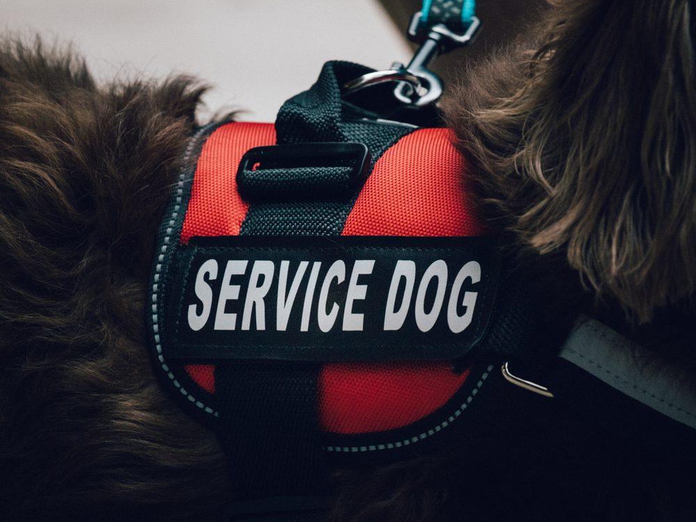 service dog wearing vest