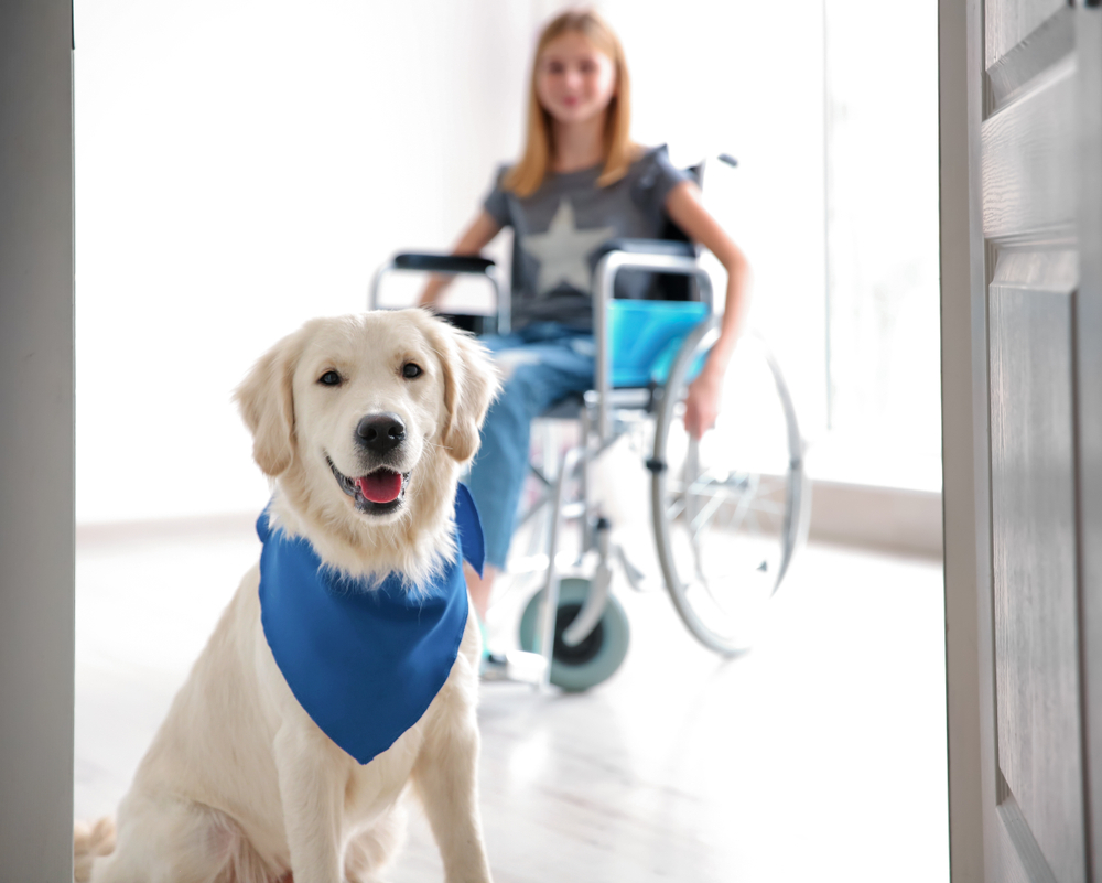 girl in wheelchair with service dog