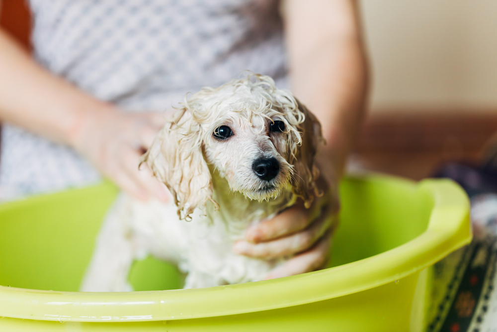 puppy being washed