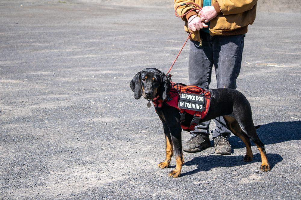 service dog training with handler