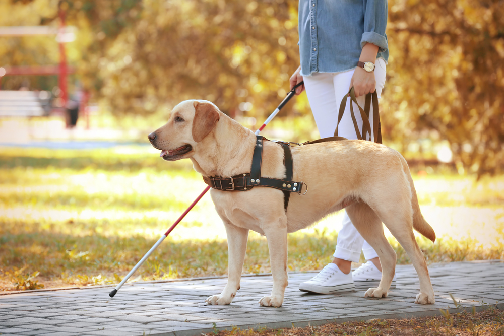 visually impaired woman with guide dog