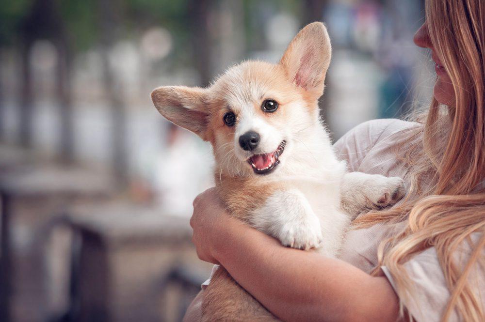 woman holding corgi puppy