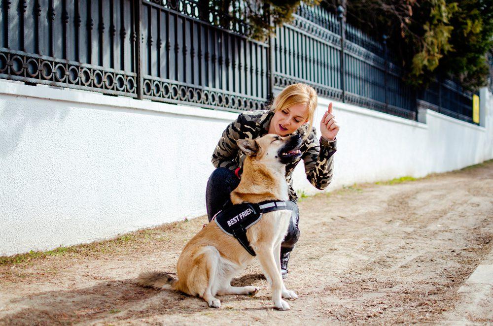 woman training service dog