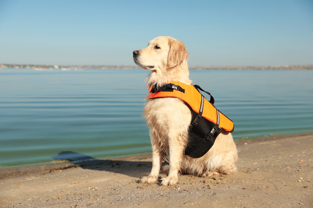 service dog on hawaiian beach
